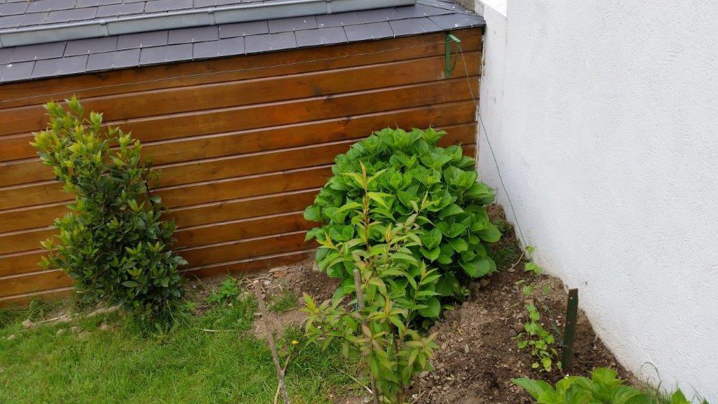 Afficher le sujet plants de for Au coin du jardin